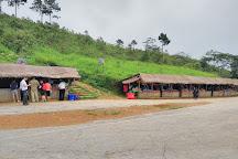 Phu Chi Fa Forest Park, Thoeng, Thailand