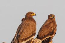 Jorbeer Conservation Reserve, Bikaner, India