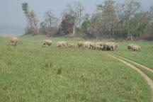 Corbett Tiger Reserve, Jim Corbett National Park, India