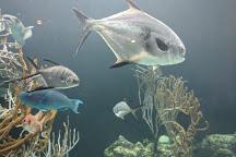 Bermuda Aquarium, Natural History Museum & Zoo, Hamilton, Bermuda