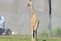 Detroit Zoo, Royal Oak, United States