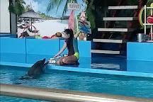 Dolphinarium Naberezhnye Chelny, Naberezhnye Chelny, Russia