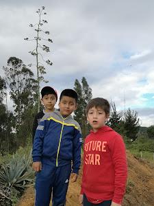 Manchybamba 6