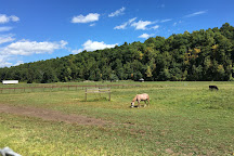 Catskill Animal Sanctuary, Saugerties, United States
