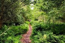 Shapwick Heath National Nature Reserve, Meare, United Kingdom