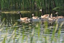 Agassiz National Wildlife Refuge, Middle River, United States