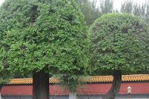 Harbin Confucian Temple, Harbin, China