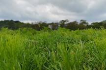 Seethawaka Wet Zone Botanic Gardens, Avissawella, Sri Lanka