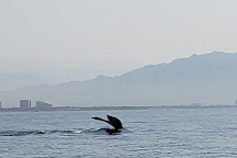 Ocean Friendly Whale Watching Tours, Puerto Vallarta, Mexico