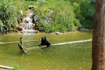 North American Bear Center, Ely, United States