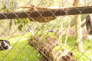Zoo de La Fleche