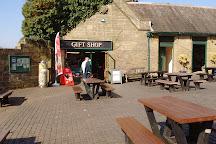 Go Ape at Margam Port Talbot, Port Talbot, United Kingdom