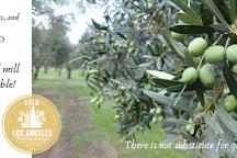 Seasons Olive Oil and Vinegar Tap Room, Bethlehem, United States