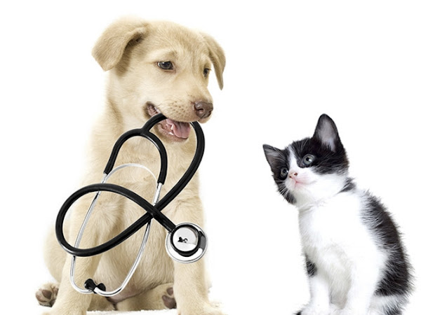 Ahmad Pets Care Clinic & Pet Shop
