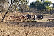 Mokolo Dam Nature Reserve, Lephalale, South Africa