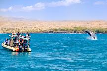 Adventure X Boat Tours, Puako, United States