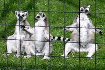 Hamerton Zoo Park, Sawtry, United Kingdom