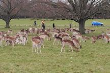 Richmond Park, Richmond, United Kingdom