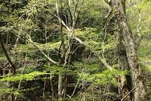 Mominoki Forest Park, Hatsukaichi, Japan