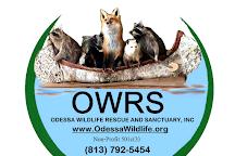 Odessa Wildlife Rescue and Sanctuary, Odessa, United States
