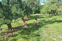 Stribling Orchard, Markham, United States