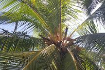 Kapuaiwa Coconut Grove, Kaunakakai, United States