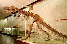 Orlov Paleontological Museum, Moscow, Russia