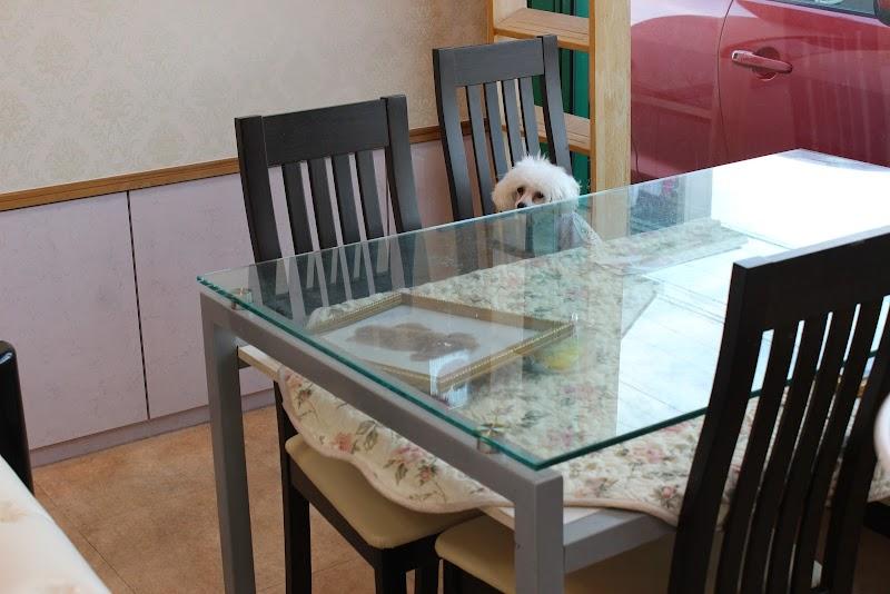 Dog&Cat専門店 ポッケ | トイプードル・ティーカッププードル・チワワの子犬専門店