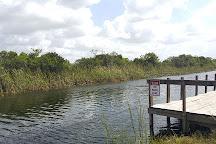Osceola panthers, Everglades National Park, United States