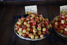 Andy's Orchard, Morgan Hill, United States