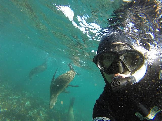 Cape Town Bucket List / Seal Snorkeling