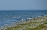 Нудистский пляж Кинбурнская коса