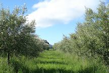 Freshfield Grove, Campania, Australia