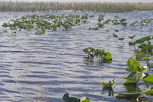 Everglades and Francis S. Taylor Wildlife Management Area, Fort Lauderdale, United States