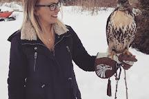 Ontario Falconry Centre, Bowmanville, Canada