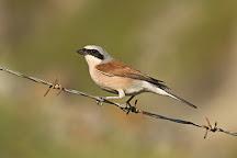 Birding in Greece, Athens, Greece
