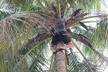 Coconut Revolution 101, San Juan, Puerto Rico