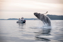 Blackfish Tours by Outer Island Expeditions, Anacortes, United States