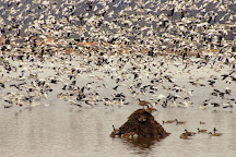 Loess Bluffs National Wildlife Refuge, Mound City, United States