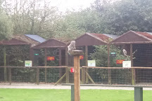 Screech Owl Sanctuary, St Columb Major, United Kingdom