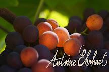 Vins d'Alsace Antoine Ehrhart, Wettolsheim, France