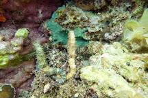 SK Divers Center, Lapu Lapu, Philippines