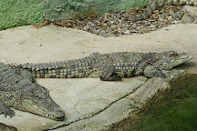 Crocodile Park, Torremolinos, Spain