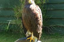 Falconry Experience Wales, Machynlleth, United Kingdom