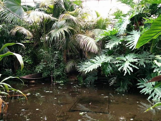 The Living Rainforest