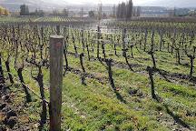 Felton Road Wines, Cromwell, New Zealand
