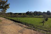 Spier Wine Farm, Stellenbosch, South Africa