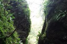 Ebbor Gorge, Wells, United Kingdom