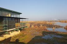Marievale Bird Sanctuary, Nigel, South Africa