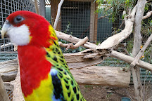 Bonorong Wildlife Sanctuary, Brighton, Australia
